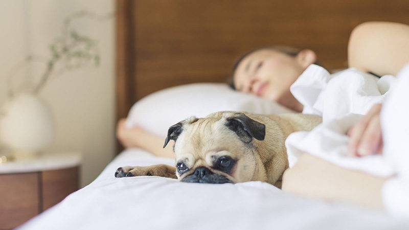 How Lawyers Can Get a Better Night's Sleep